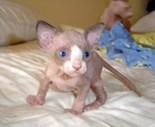 Cat Kitten Photo