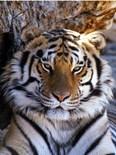 Animal Wildlife Framed