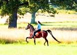 Saddleseat