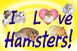 Hampster