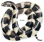 Snakes Plane